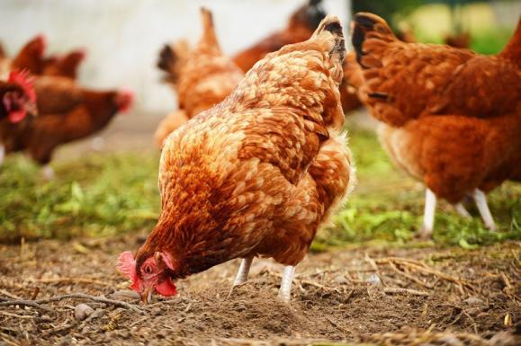 nutrition animaux élevage