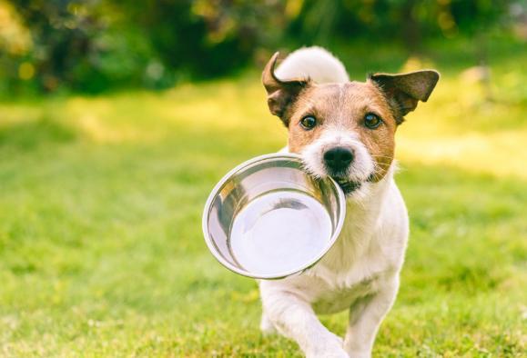 nutrition animaux domestiques
